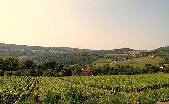 Burgundy vineyard, vineyard soils
