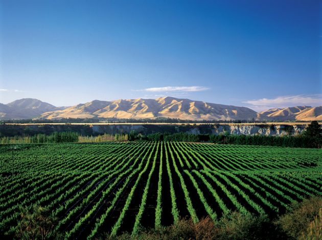 awatere-vineyard