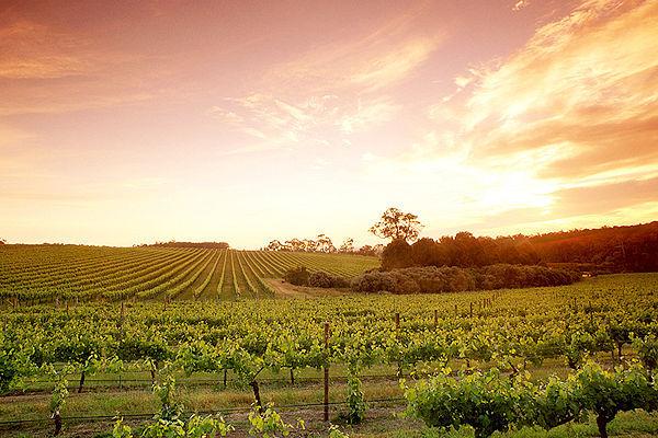 amberley vineyard