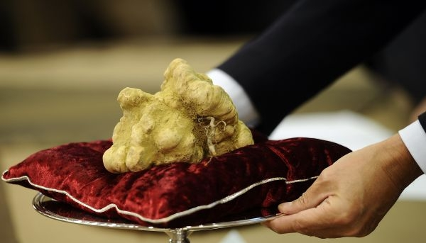 giant white truffle