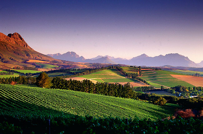 South Africa's Pinotage