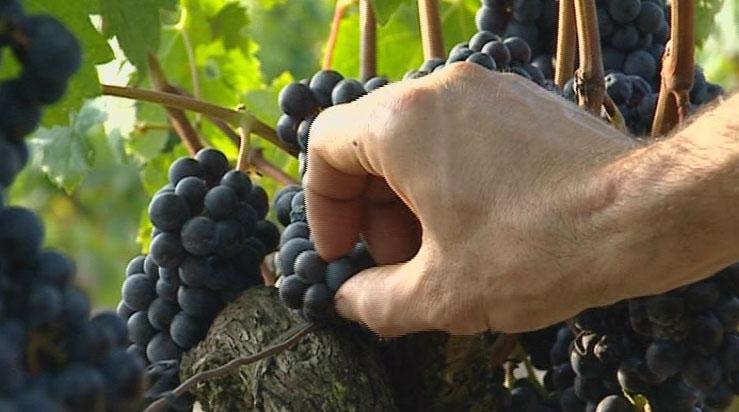 1855 Bordeaux classification