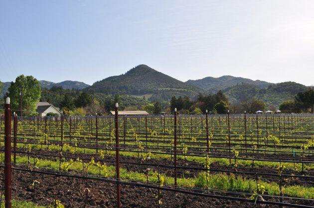 landmark vineyard