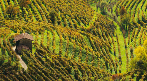 joy of terroir, terroir,