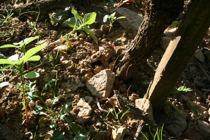 stones, vines
