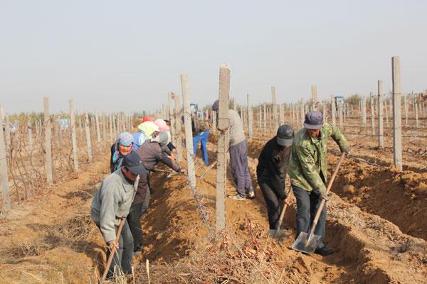 Bruno Paumard of Hansen Organic Vineyards