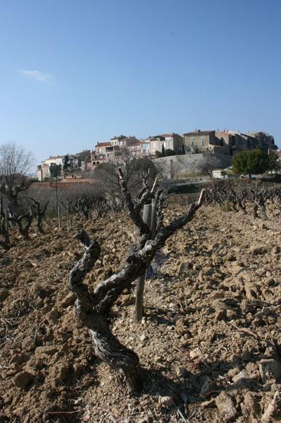 vines, wine, jefford, bandol,