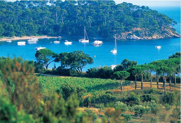 Provence vineyards, French wine