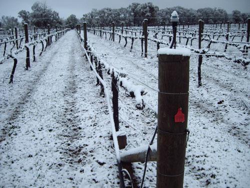 Jefford snow, jefford, snow, snow vines, winter,