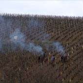 Year in Burgundy
