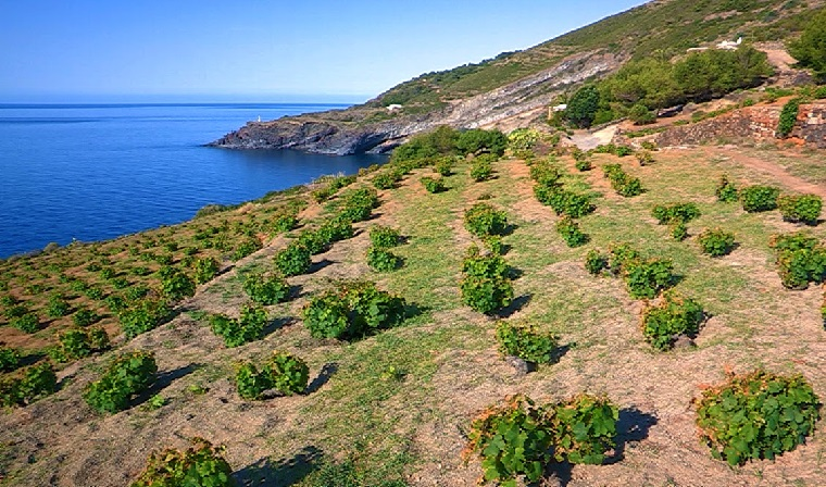 UNESCO world heritage wine regions to visit - Decanter