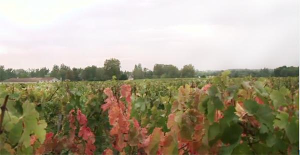 Bordeaux 2012, Bordeaux En Primeur 2012, Bordeaux 2012 En Primeur Haut Bailly