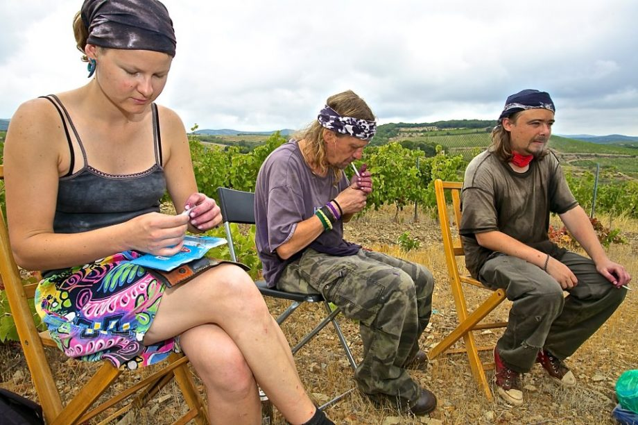 Domaine de Cébène (Faugères) vineyard