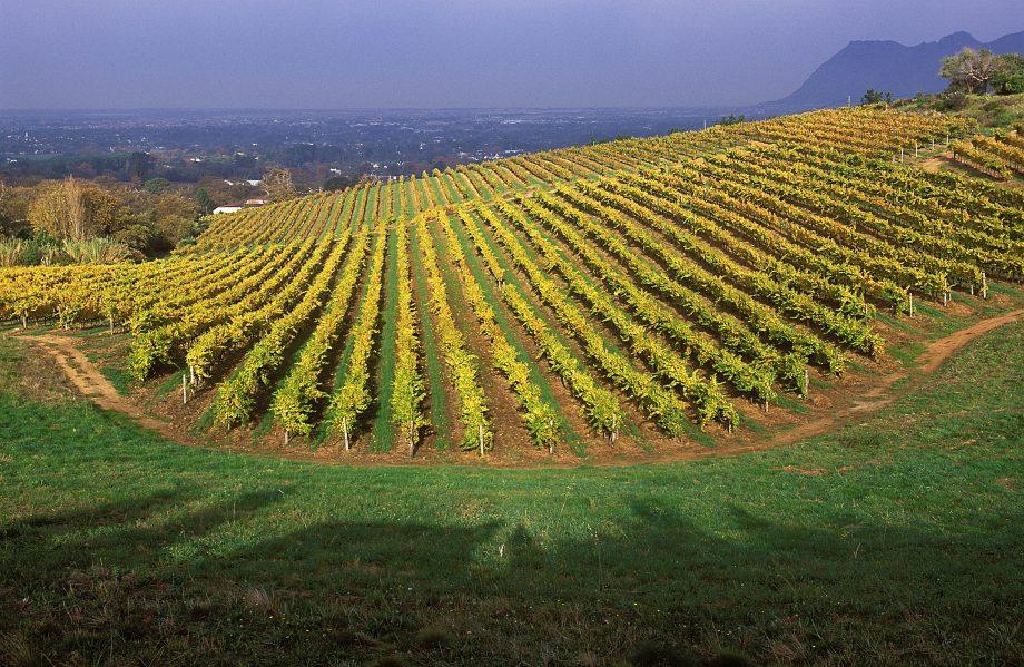 South Africa- Groot Constantia estate