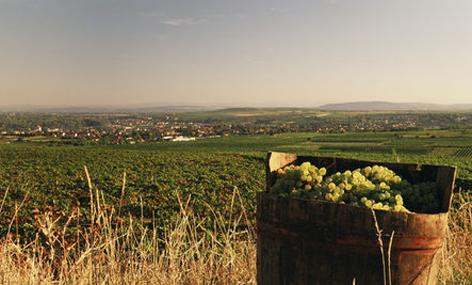 Kamptal vineyards, Austria