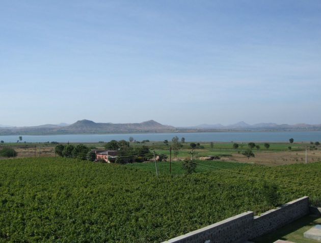 Nashik vineyards