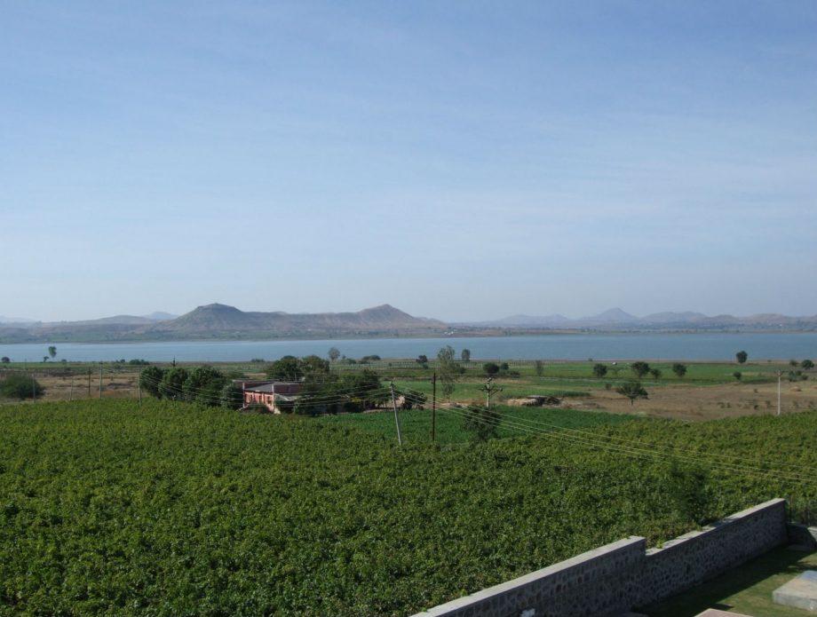 Nashik vineyards
