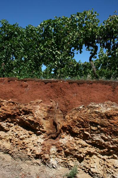 Coonawarra soils