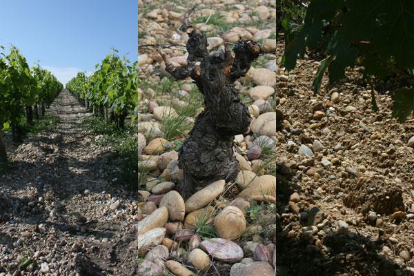 Andrew Jefford soils