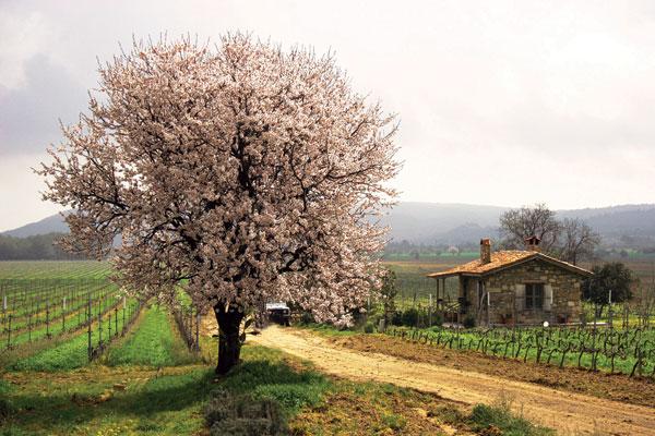 Turkey vineyard