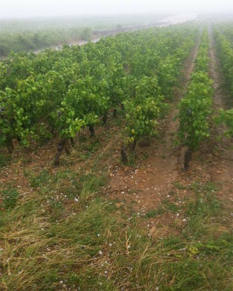 burgundy hail
