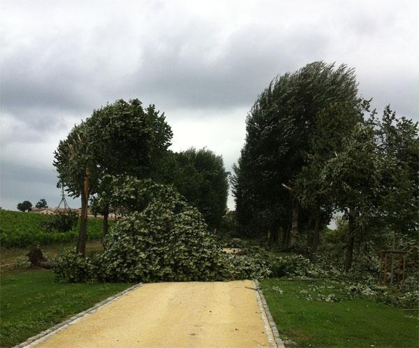 Medoc storms Lafite