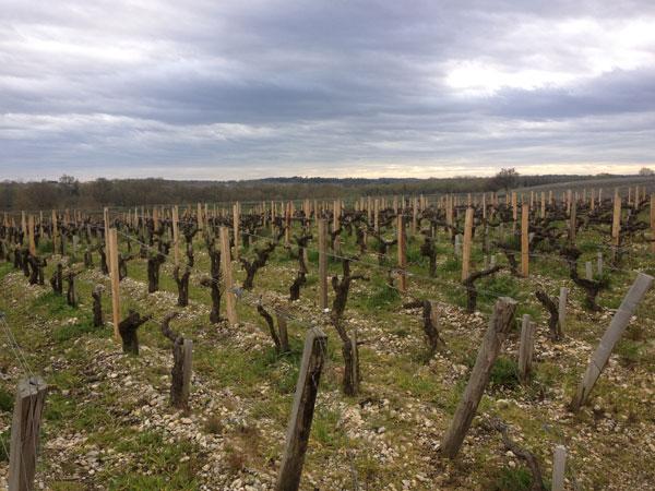 Bordeaux 2012 en primeur,