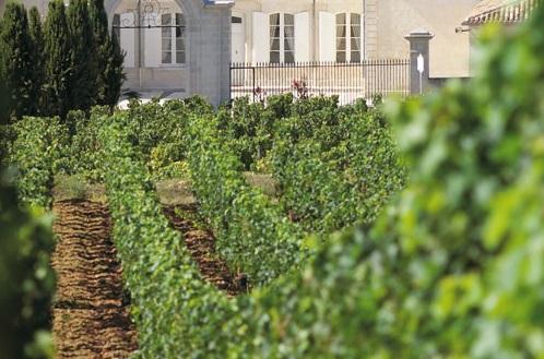 Dauphine Vines