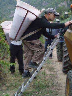 Handpicked harvest 2013