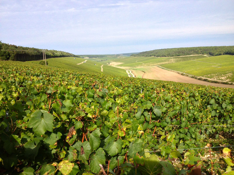 Domaine Laroche, Chablis, Burgundy