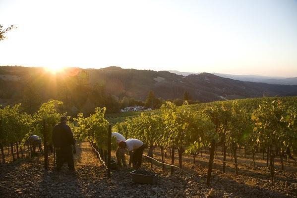 Napa Valley Harvest, 2013 vintage