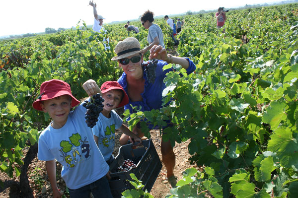 Family grapepicking day at Domaine Virgile Joly