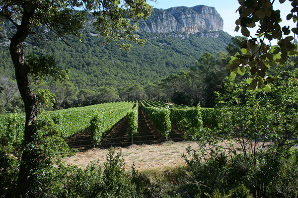 Hortus vineyards