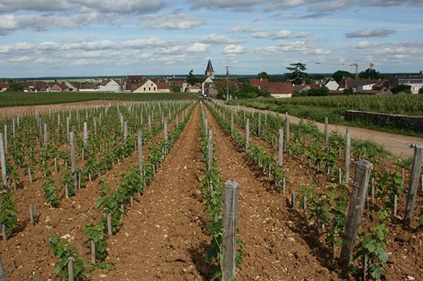 Vosne-Romanee village - Jefford