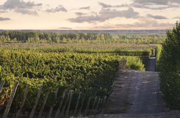 Wines of Argentina, Wines of Argentina patagonia Landscape in Neuquén