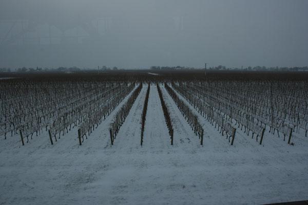 Ice wine vineyard Canada