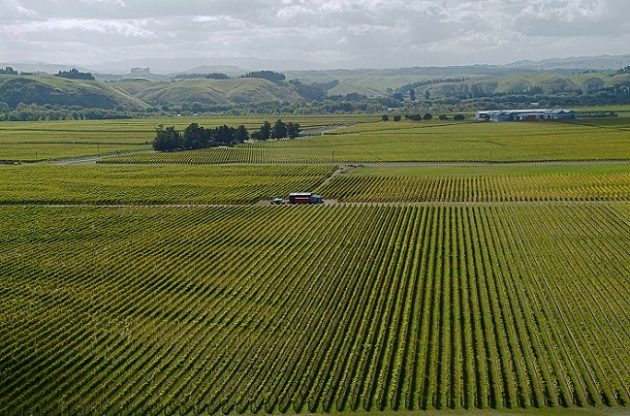 Villa Maria vineyards, Gimblett Gravels