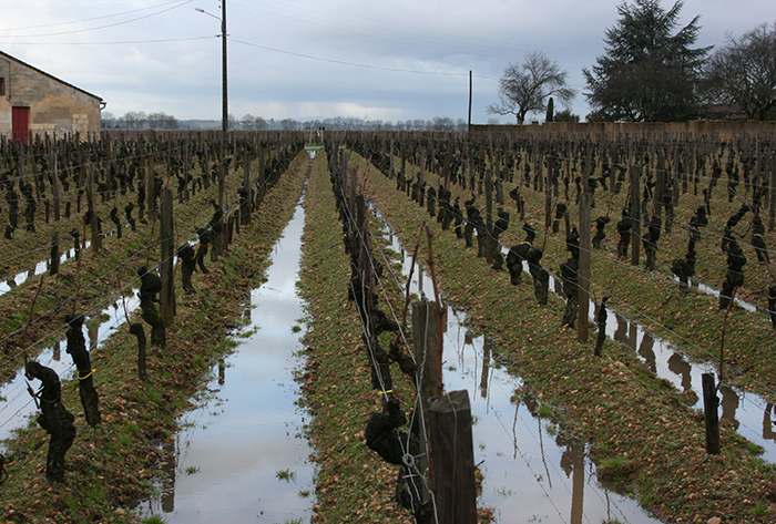 wet feet in Pomerol - Andrew Jefford