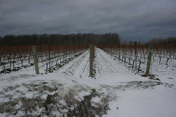 Hidden Bench winter vineyards Canada