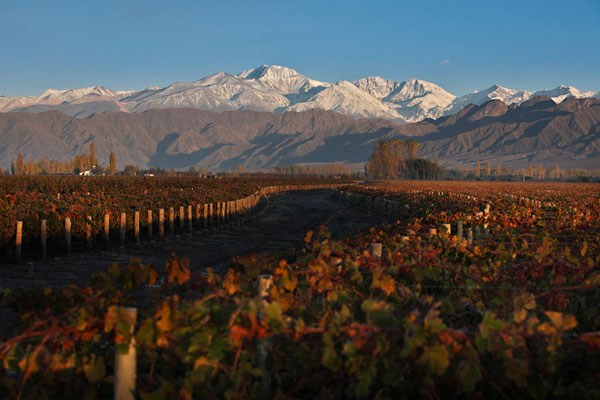 Wines of Argentina, Wines of Argentina Mendoza Vineyards
