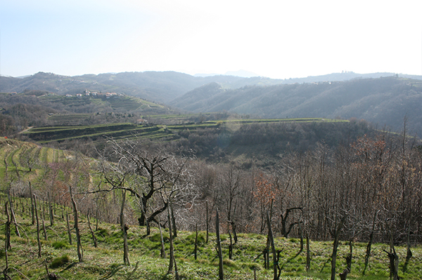 high spring vineyards in Brda - Jefford