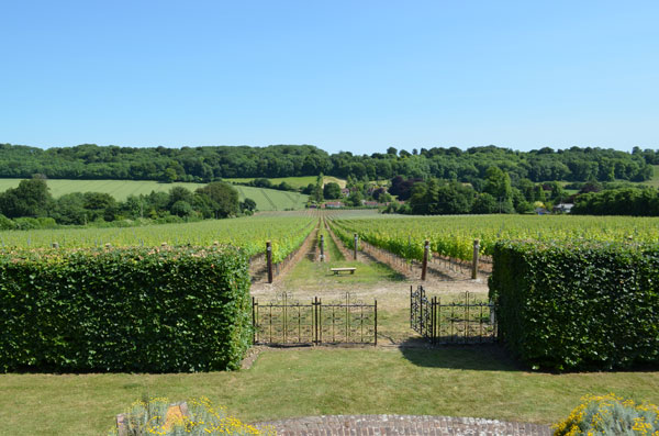 Hambledon Vineyard, English winery, English vineyard,