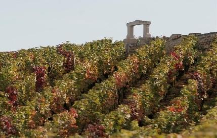 Clos des Lambrays vineyard Burgundy