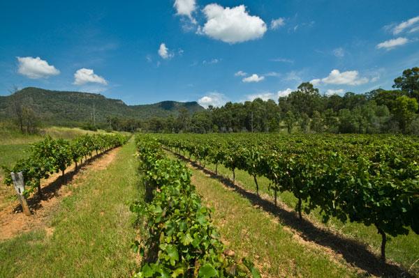 Australia Hunter Valley Tyrrell's Wines vineyards, Australia, hunter valley, tyrrells, australia vineyard
