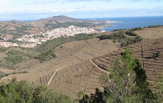 Banyuls Roussillon