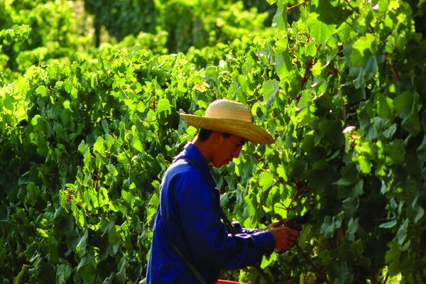 Brazil wines