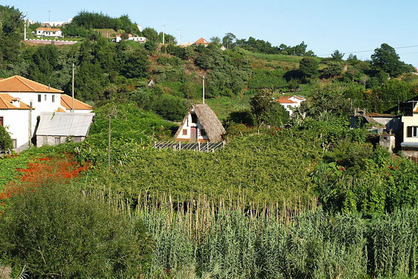 Jefford, Madeira vineyard