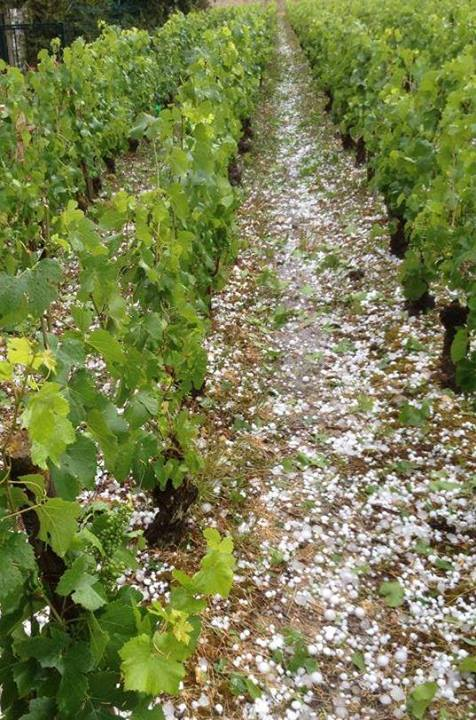 Burgundy Hail in Volnay June 2014