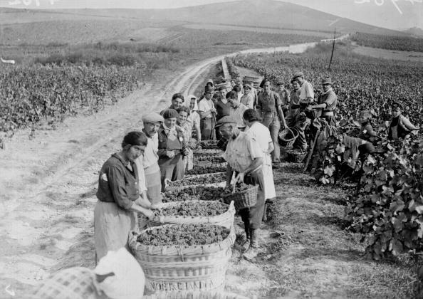 Champagne World War 2