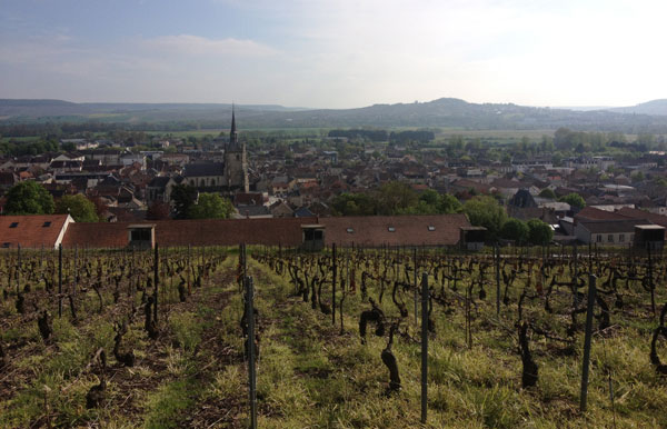 Champagne vineyard
